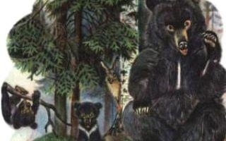 Аудиосказка о медведихе