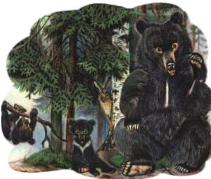 Картинка к сказке о медведихе
