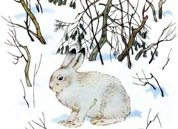 Картинка к сказке Приказ на снегу