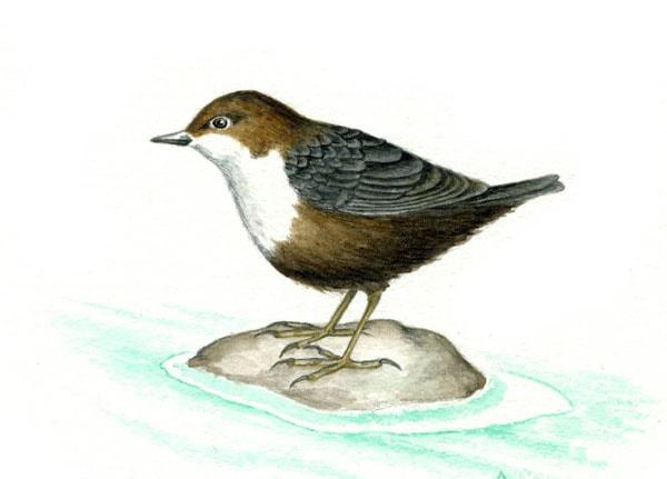 Картинка к сказке Сумасшедшая птица