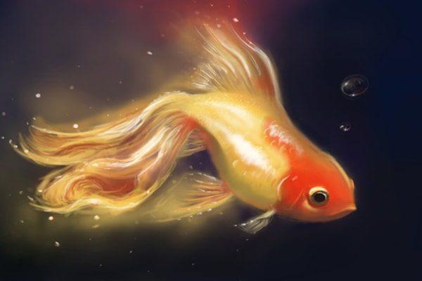 Картинка к сказке Морская рыбка
