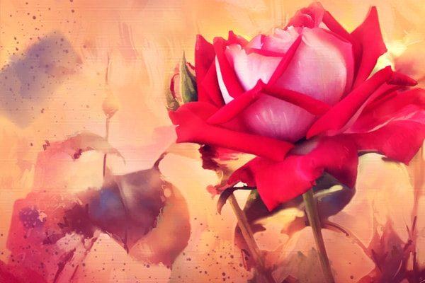 Картинка к сказке Роза с могилы Гомера